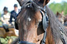 Free Brown Horse Stock Photos - 2927953