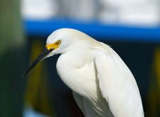Free White Great Egret Stock Image - 2928391