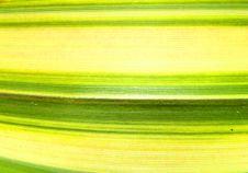 Free Green Line Leaf 4 Stock Image - 2928421