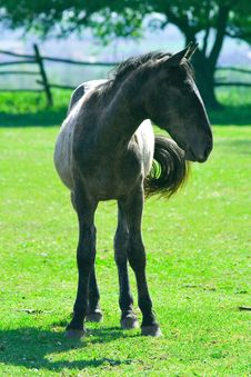 Free Young Black Horse Royalty Free Stock Images - 2928629