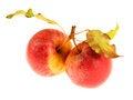 Free Apples Stock Photo - 29209670