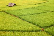 Free Hut And Rice Fields Stock Images - 29203374