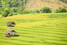 Free Hut And Rice Fields Stock Photography - 29203422