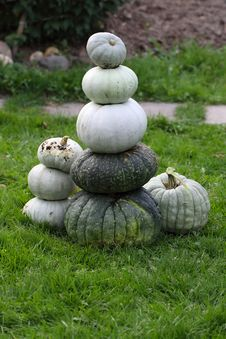 Free Fresh Harvested Pumpkins Royalty Free Stock Images - 29209859