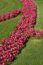 Free Red Colorful Flowerbeds In Summer Royalty Free Stock Photos - 29217638