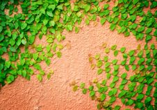 Plant And Wall Stock Photos