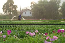 Free Gardener Pour The Water Stock Photo - 29214980