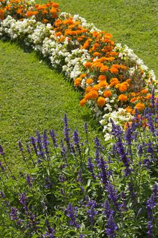 Free Blossoming Colorful Flowerbeds In Summer Stock Image - 29217641