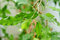 Free Branch With Green Leaves Royalty Free Stock Photography - 29215717
