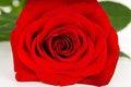Free Macro Flower Bud Roses Stock Photos - 29220083