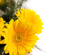 Free Bouquet Of Yellow And White  Flowers Royalty Free Stock Photography - 29225827