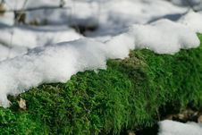 Free Snow And Moss Stock Photo - 29220730