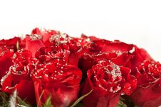 Free Red Rose Flowers  With Sparkle Particles Royalty Free Stock Images - 29225779