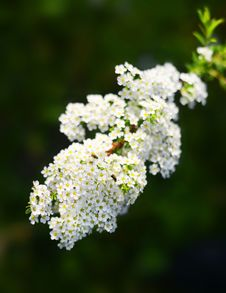 Free Flowering Royalty Free Stock Photo - 29226495