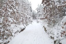 Free Forest Under Snow Cover Royalty Free Stock Photography - 29227087