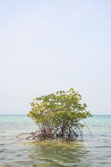 Free Mangrove In Sea Stock Photos - 29227523