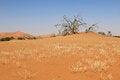 Free Sossusvlei Sand Dunes Landscape In The Nanib Desert Near Sesriem Royalty Free Stock Photography - 29231487