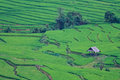 Free Terraced Rice Fields In Northern Thailand Stock Photography - 29234652