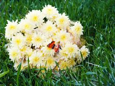 Free Bouquet From Yellow Asters With Butterfly Stock Images - 29232434