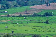Free Terraced Rice Fields In Northern Thailand Stock Photos - 29234563