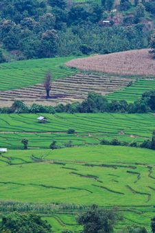 Free Terraced Rice Fields In Northern Thailand Royalty Free Stock Photo - 29234625