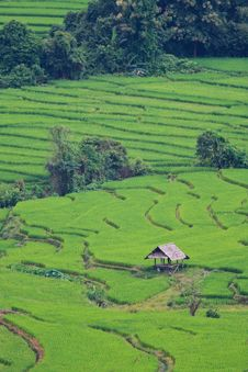 Free Terraced Rice Fields In Northern Thailand Stock Photo - 29234700