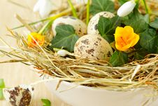 Free Easter Nest With Quail Eggs Royalty Free Stock Images - 29240149