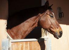 Free Brown Horse Stock Photos - 29248133