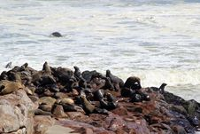 Free Colony Of Seals At Cape Cross Reserve, Atlantic Ocean Coast Stock Photo - 29249490
