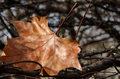Free The Last Autumn Leaf Stock Photography - 29252962