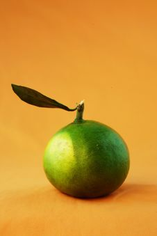 Green Citrus Stock Photography