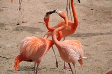 Free Flamingo Royalty Free Stock Image - 29253046
