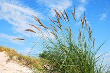 Free Dunes Plant Stock Image - 29259911