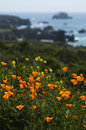 Free California Wild Poppies And Coastal Spring Stock Photography - 29269752
