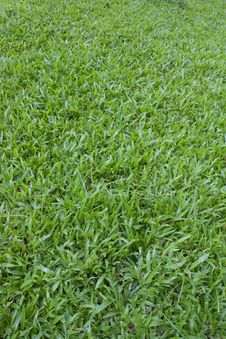Free Grass Stock Images - 29267054