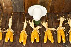 Free The Harvest Corns Royalty Free Stock Photos - 29267338