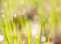 Free Fresh Grass Royalty Free Stock Image - 29287926