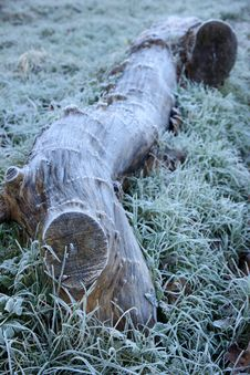 Big Log With Winter Frost Royalty Free Stock Photo