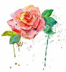 Free Rose Flower Stock Images - 29282844