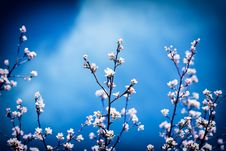 Free Blossoming Apple Tree Stock Photos - 29287913