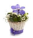 Free Vanda And Chrysantemums Flowers Isolated Stock Photos - 29295133