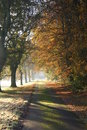 Free Autumn Woodland Royalty Free Stock Photos - 29297008