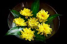 Free Yellow Flower Arrangement Royalty Free Stock Photo - 29292305