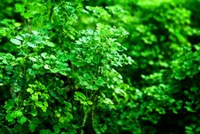 Free Green Lush Background Royalty Free Stock Images - 29292319