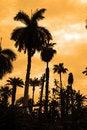 Free Palm Trees Silhouette Royalty Free Stock Photos - 2930318