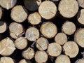 Free Logs Royalty Free Stock Photo - 2937345