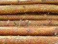 Free Timber Royalty Free Stock Photos - 2939478