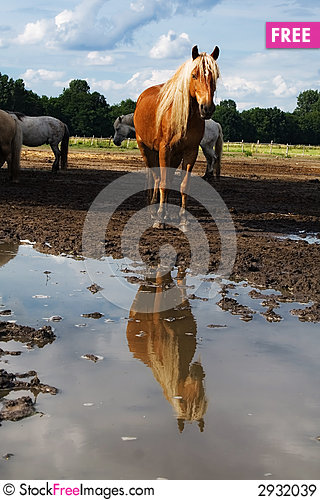 Free The Horse And Reflection Royalty Free Stock Images - 2932039