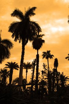 Free Palm Trees Silhouette Royalty Free Stock Photos - 2930318
