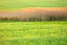 Free Spring Stock Photography - 2931912